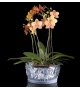Prêt pour l'expédition - Bacchantes Lalique Coupe