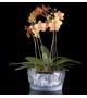 Pronta consegna - Bacchantes Lalique Ciotola