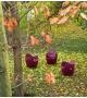 O-Nest Moroso Sillón