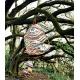 Tropicalia  Moroso Cocoon