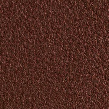 Premium Leather_ Coconut