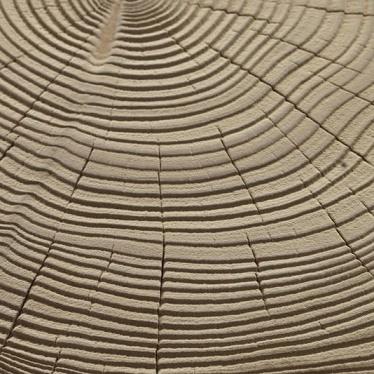 Sandblasted Cedar